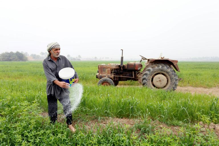 زراعة الحنطة في العراق